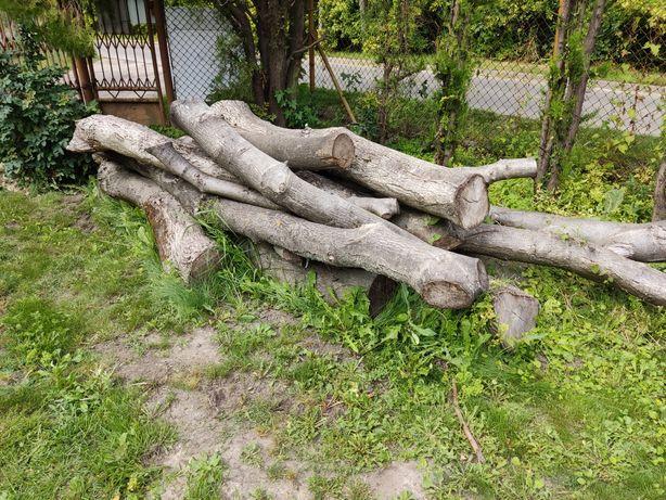 Drzewo z orzecha