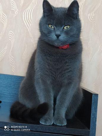Отдам котят от красивой мамы кошки