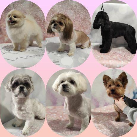 kurs groomingu strzyżenie psów Bytom centrum Pusia 3100zł