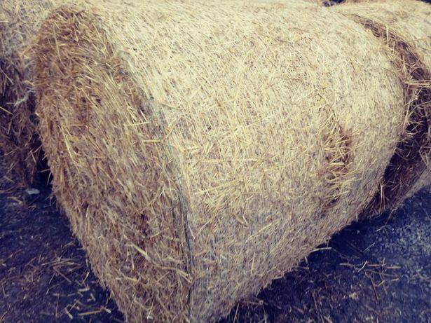 Słoma jęczmienna sucha magazynowana, nie pszenna żytnia pszenżytnia