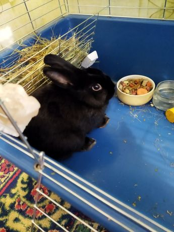Продам декоративного кролика со всеми принадлежностями