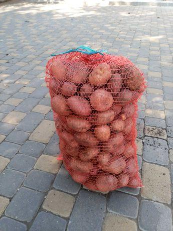 Продам картоплю домашню велику і насіневу
