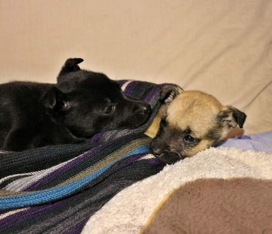 Щенки щенок щеночки
