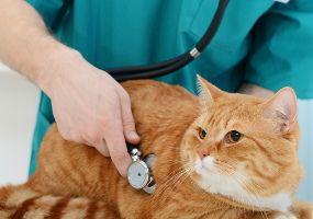 Ветеринарный врач предлагает услуги