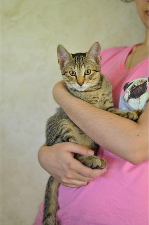 Котенок ищет дом в добрые руки котята