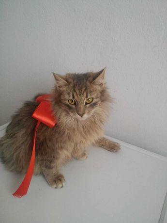Zaginął kotek- Chłopice i okolice