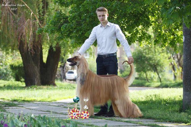ПРОФЕССИОНАЛЬНЫЙ ХЕНДЛЕР. Показ собак на выставках. Занятия с собакой.