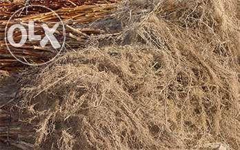 Framboesas plantas Reguengos de Monsaraz - imagem 1