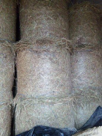 Sprzedam siano i słomę pszenną i żytnią Możliwość transportu