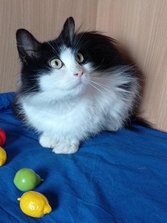Кішка 1 рік