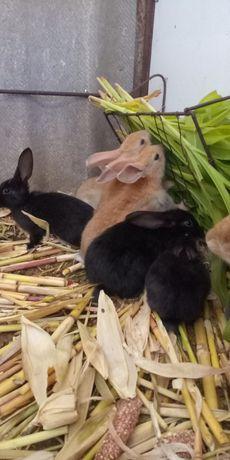 Кроли, крольчата
