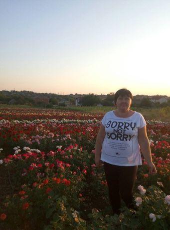 Продаем саженцы роз