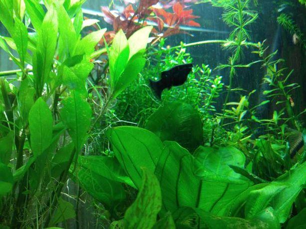 KNO3 azot i potas do akwarium 500ml