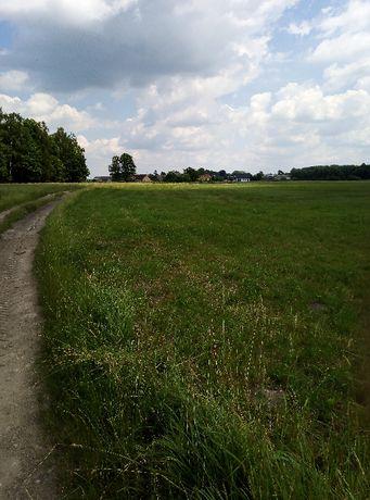 Nieruchomość rolna 35000 m2. Dołki gm Turośń Kościelna