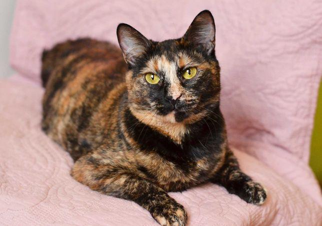 Кошечка Маргарет 1 год, стерилизована (кошка, кот, котята, коты, котя