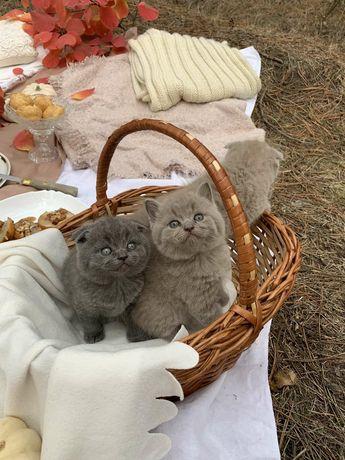 Мишки Тедди вислоушки.