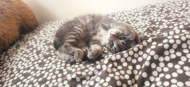 Віддам котика в добрі руки
