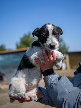 Джуди, 4 месяца, щенок собачка собака щеня
