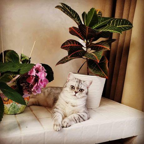 Перетримка котів, птахів, гризунів догляд, передержка