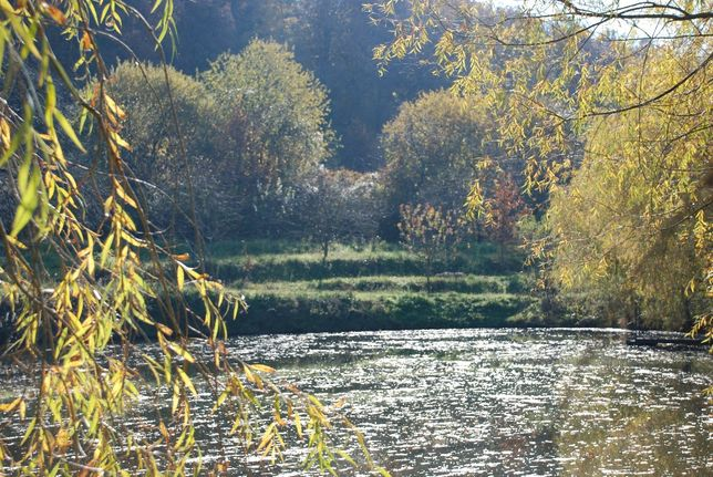 Ухоженное ранчо на юго-западе Закарпатской области