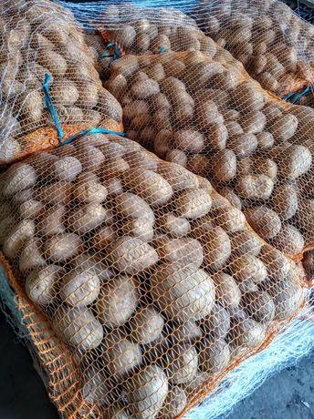 Ziemniaki GALA - 15kg