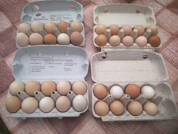 Jaja kurze wiejskie sprzedam.