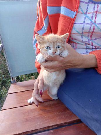 Отдам рыжего котенка в хорошие руки