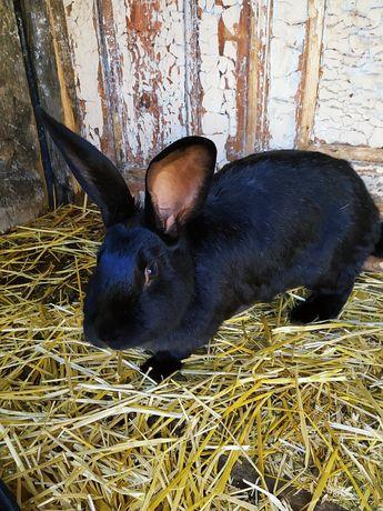 Кролики от мала до велика