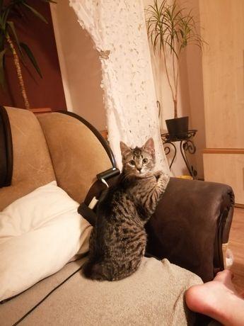 Za darmo koty do dodania