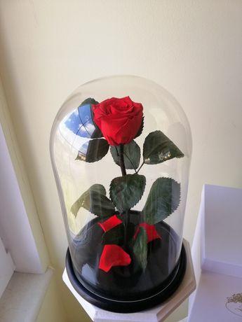 Роза в Колбе.Лучший подарок для своих любимых.Тренд 2020 года.