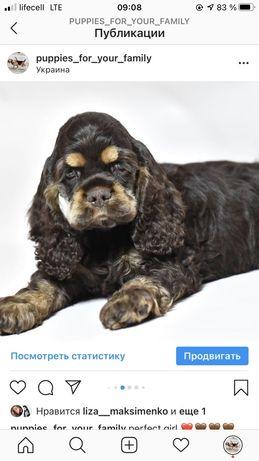 Спаниели КСУ-FCI