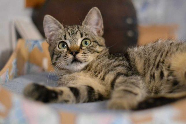 юна кішечка в смугастій шубці 4м