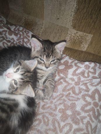 Mam do oddania 2 kotki
