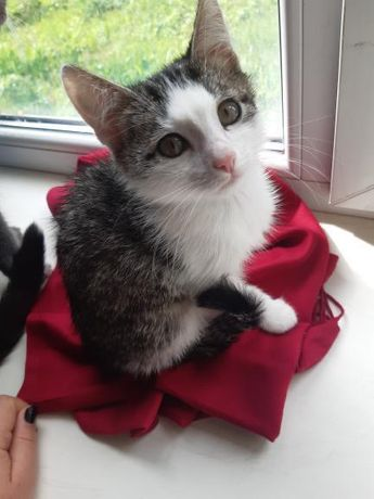 Деми Муррр котенок в добрые руки
