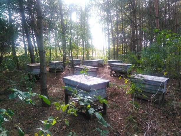Pszczoły z ulami (ule) 10x wlkp