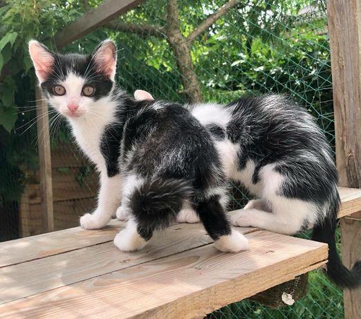 Arletki - trzy przecudne koteczki :)