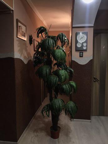 Декоративна пальма