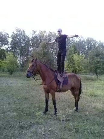 Конные прогулки,обучение верховой езде. Фотосессии с лошадьми.