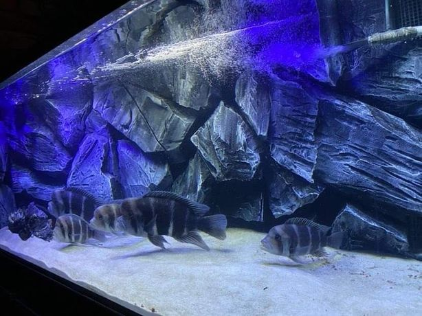 Tła strukturalne 3d do akwarium każdy wymiar imitacje skał zabudowy fi