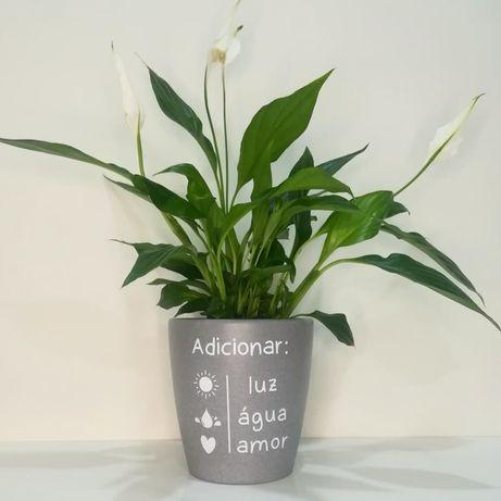 Vaso com planta Lírio da Paz