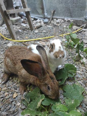 Кролик. Кролики. Кролі. Кролиці. 4 месяца