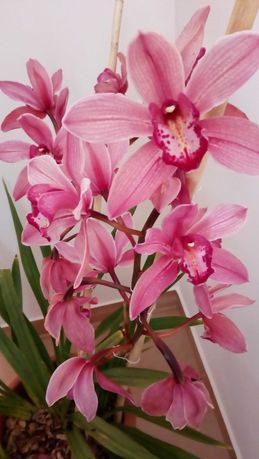 Vasos de Orquídeas com portes incluídos