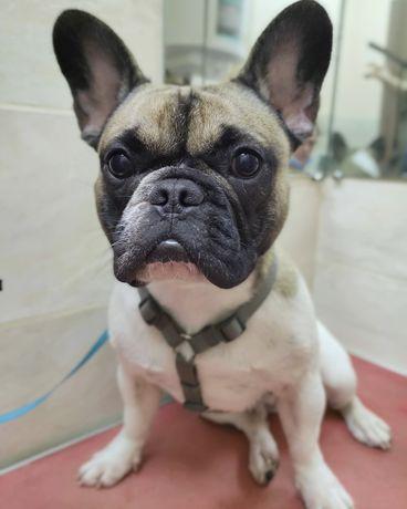 Стрижка собак, котов, экспресс линька уходовые процедуры