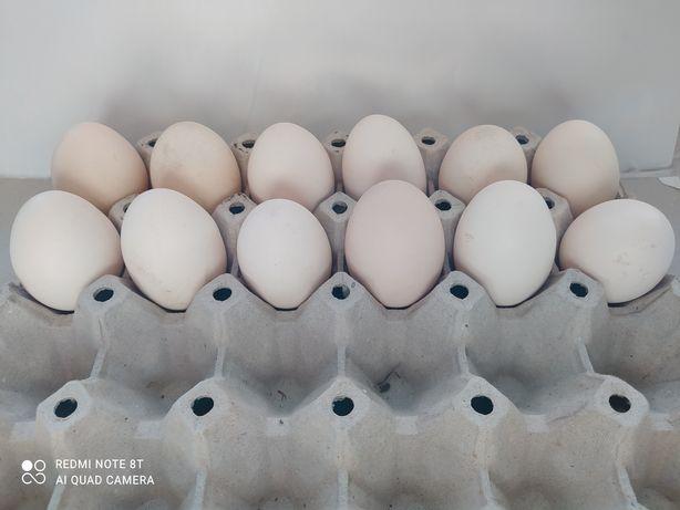 Sprzedam jajka z wolnego wybiegu