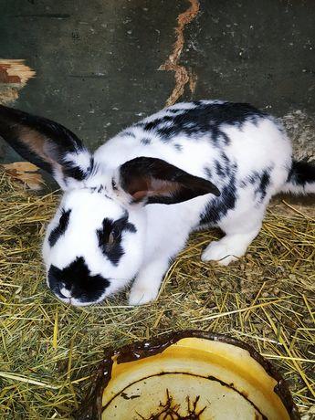 Кролики от 1 мес и старше