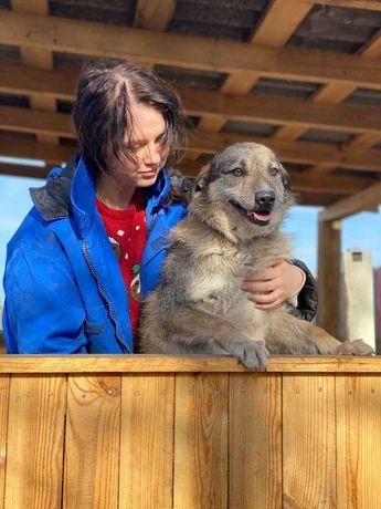 Классный пес по имени Енот. Около 5 лет. Собаки.