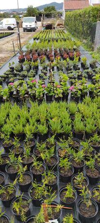 Plantas  floreiras madeira 3€