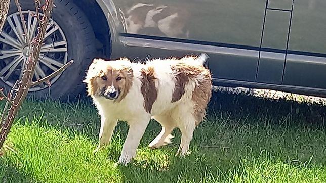 Допоможіть знайти собаку