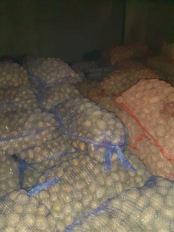 Ziemniaki 30-45  Riwiera