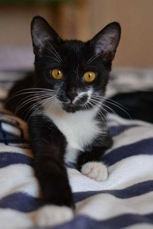 карапузик котичок в чорно-білій шубці 4м